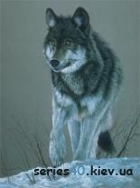 Wolves Pack | 240*320
